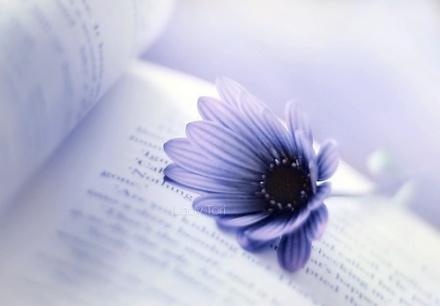 关于爱情的英文句子 带翻译